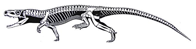 euparkeria-skeleton-and-silhouette