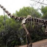 Esqueleto de Brachiosaurus