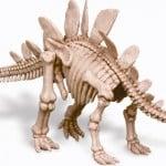 Esqueleto de Stegosaurus