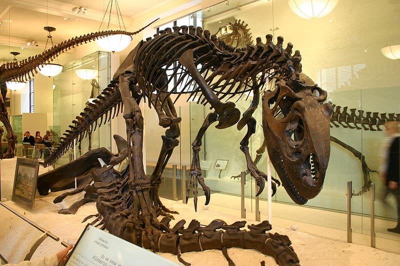 800px-Allosaurus_fragilis_over_Apatosaurus_excelsus