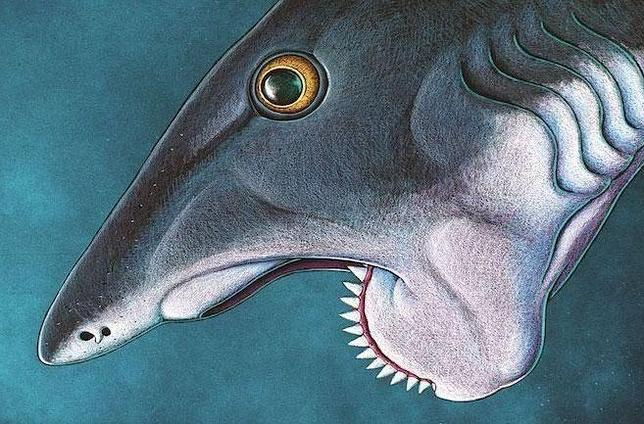 Helicoprion3