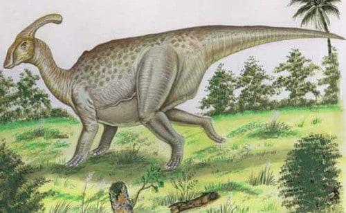 Parasaurolophus3