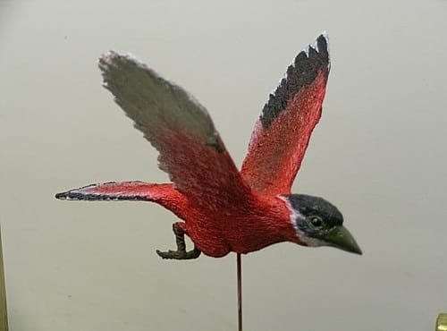 liaoxiornis
