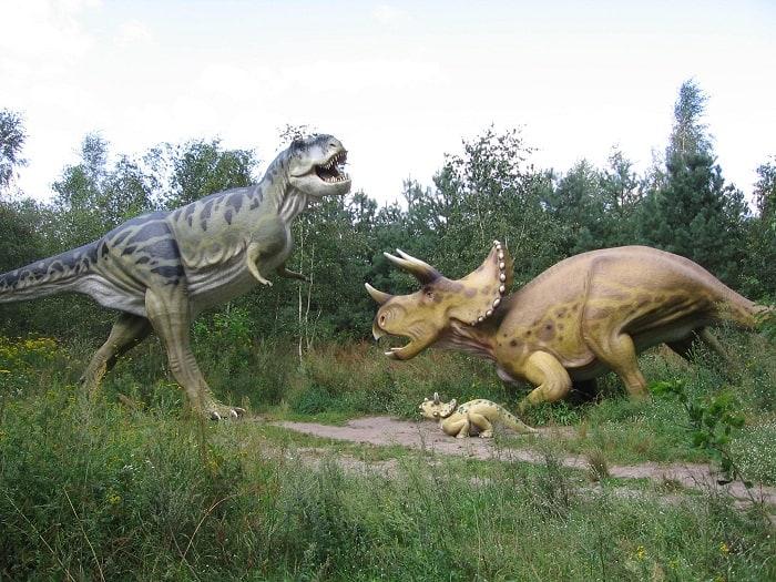 triceratops contra tyrannousaurus rex