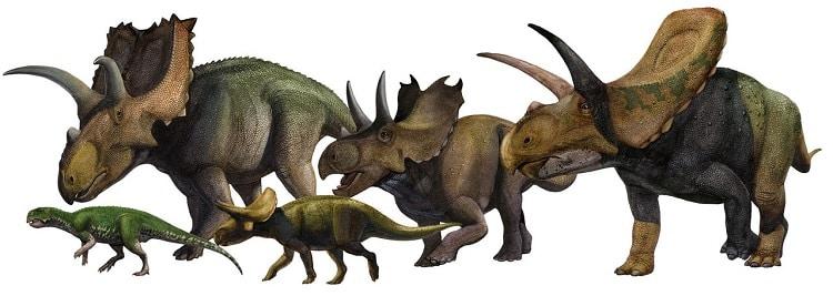 ceratopsios