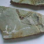 Fósil de Archaeopteryx(von Meyer, 1955), erroneamente clasificado como Pterodactylus