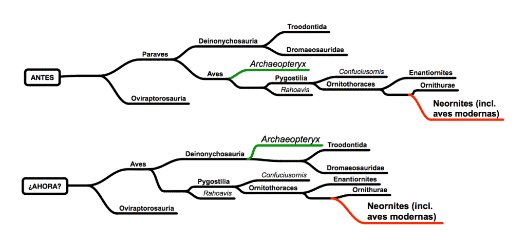 Cladograma de Archaeopteryx según estudios clásicos y según algunos posibles nuevos descubrimientos.