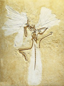 "Archaeopteryx, ejemplar ""de Londres"" (Owen, 1861)"