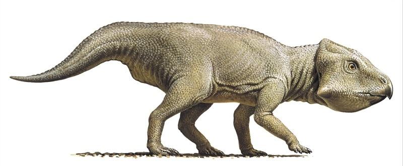 Resultado de imagen para leptoceratops