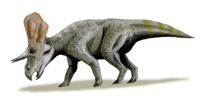 recreacion zuniceratops
