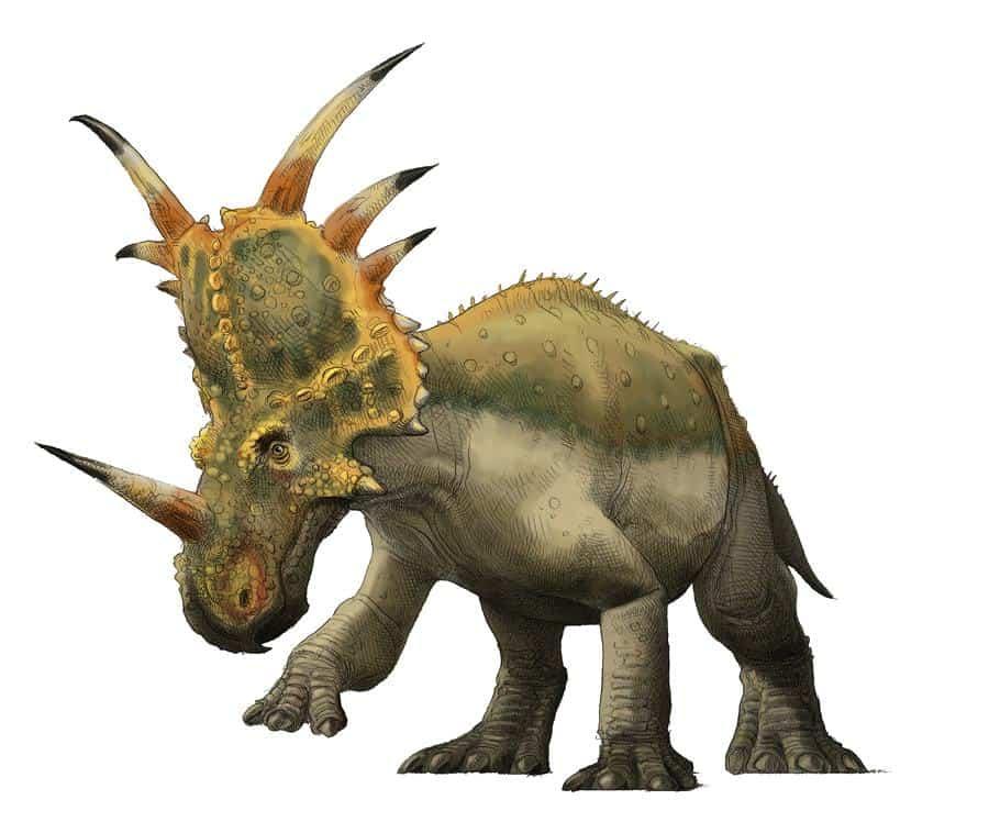 styracosaurus_by_pheaston-d4i63ny