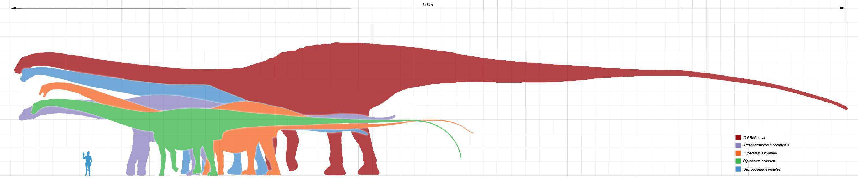Longest_dinosaurs