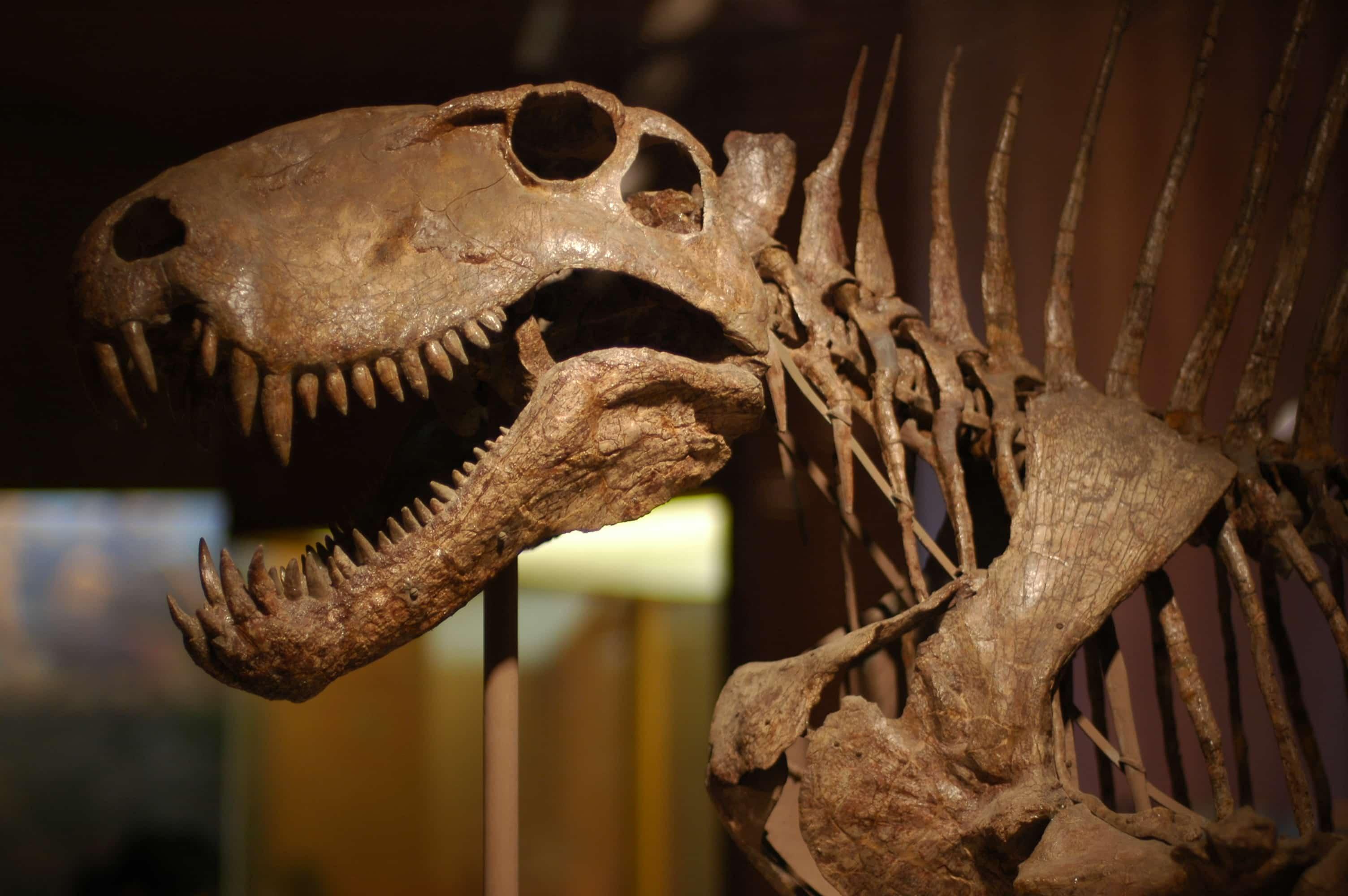 Dimetrodon_skull