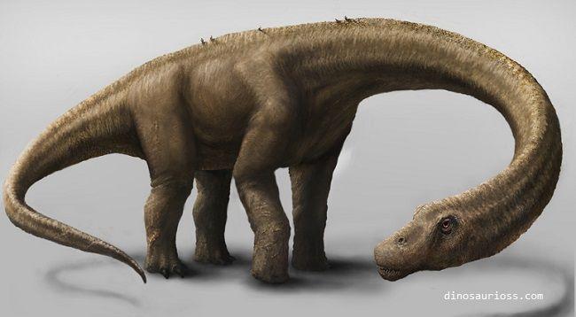 Saurópodo Titanosaurio