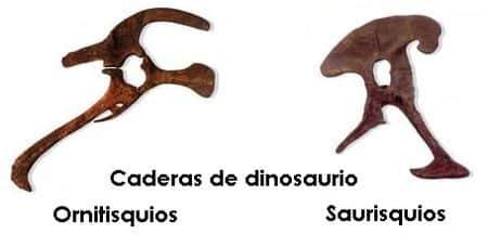 Caderas Ornitisquios y Saurisquios
