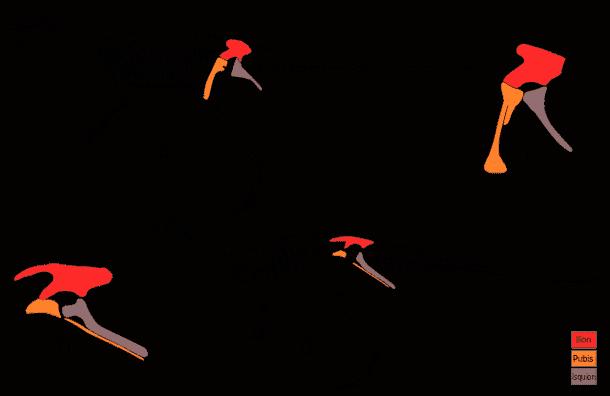 caderas-ornitisquios