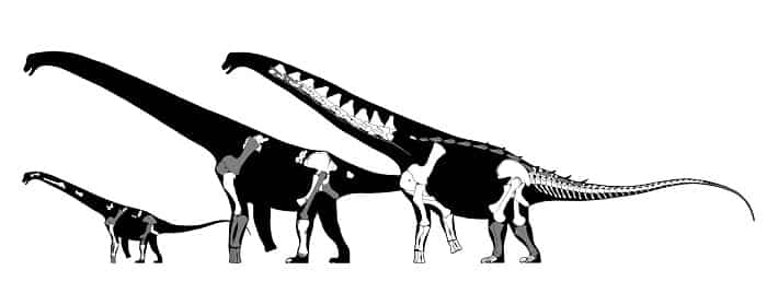 Características del Alamosaurus