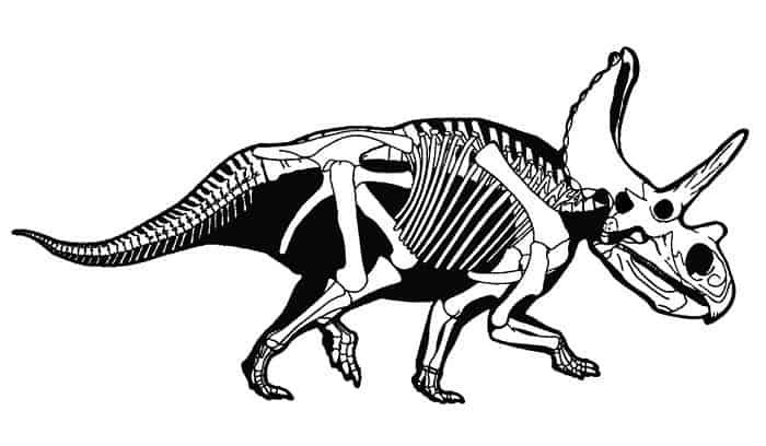 Descripción del Anchiceratops