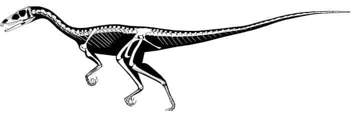 Descripción del Eoraptor