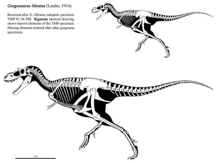 Descripción del Gorgosaurus