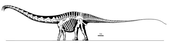 Descripción del Supersaurus