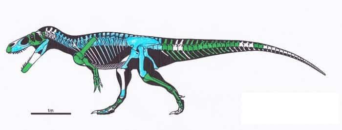 Descripción del Torvosaurus