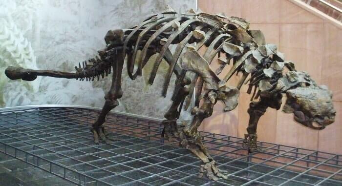 Reconstrucción del Euplocephalus