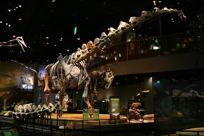 Esqueleto de Alamosaurus reconstruido en el Museo de Dallas