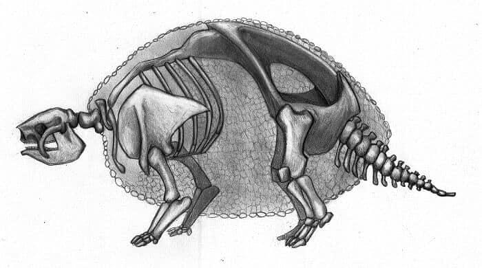 Esqueleto sobre Glyptodon