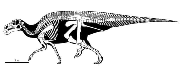 Descripción Maiasaura