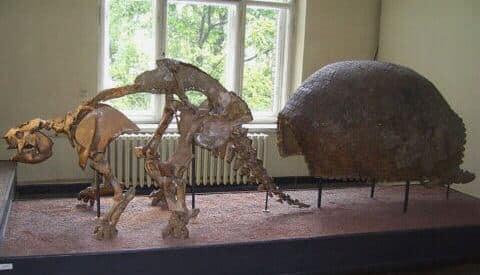 Glyptodon fosil
