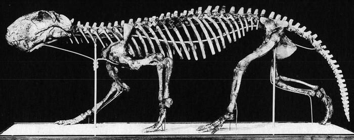 Reeconstrucción de un Cynognathus