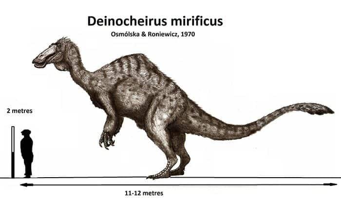 Características del Deinocherus