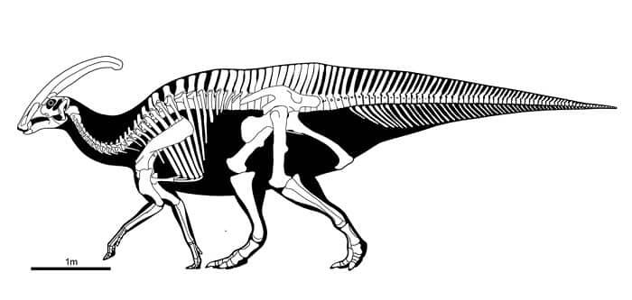 Descripción sobre el Parasaurolophus