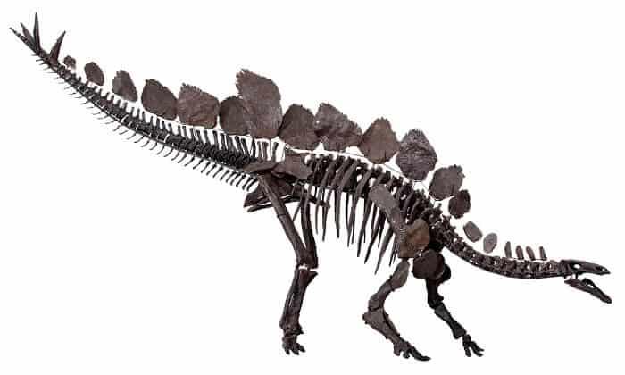 Descripción del Stegosaurus