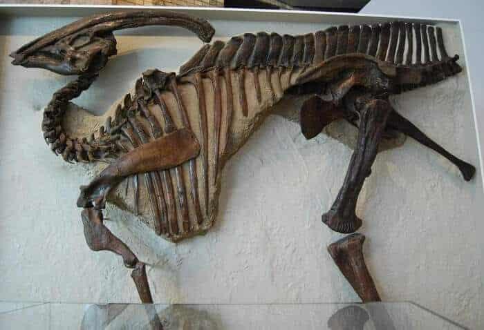 Reconstrucción de un Parasaurolophus