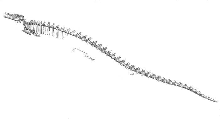 Descripción Brasilosaurus