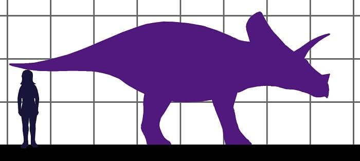 Descripción del Torosaurus