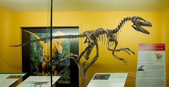 Descubrimiento del Deinonychus