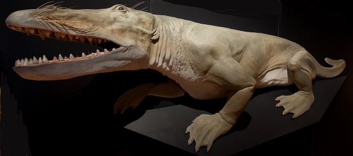 Causas de la extinción del Ambulocetus