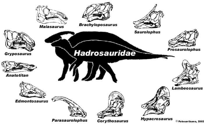 Familia de Hadrosáuridos