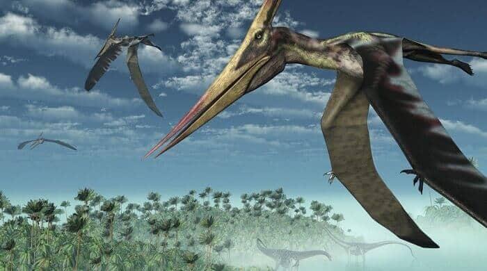 habitat-pterodactylus