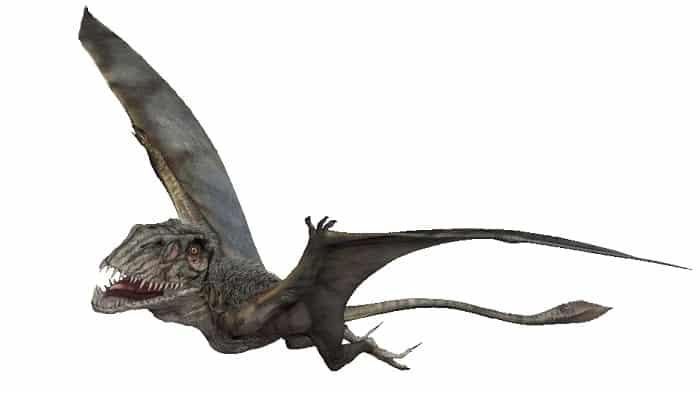 informacion-dimorphodon