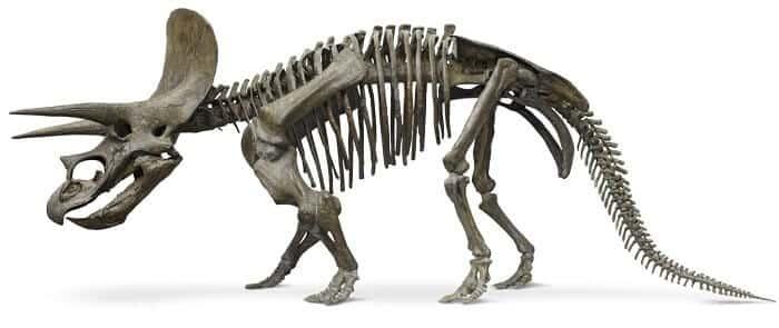 Reconstrucción del Triceratops