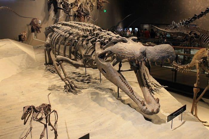 Restos del Deinosuchus de la Formación Kaiparowits