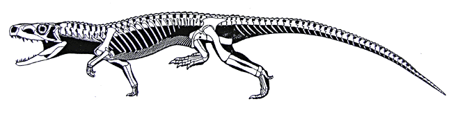 euparkeria-skeleton-and-silhouette