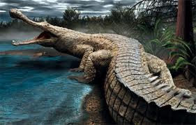 sarcosuchus, el cocodrilo gigante