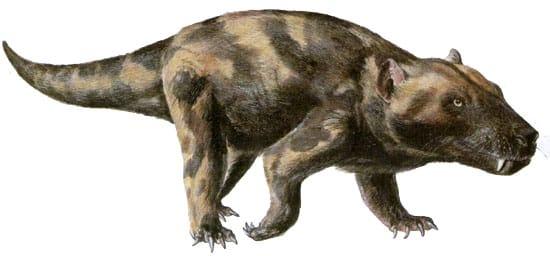 el perro oso
