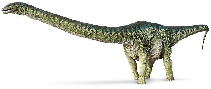 Detalles sobre el Apatosaurus