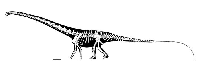 Descripción del Barosaurus